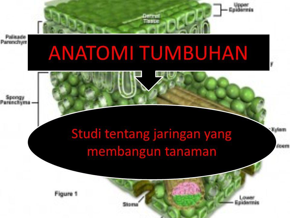 ANATOMI TUMBUHAN Studi tentang jaringan yang membangun tanaman