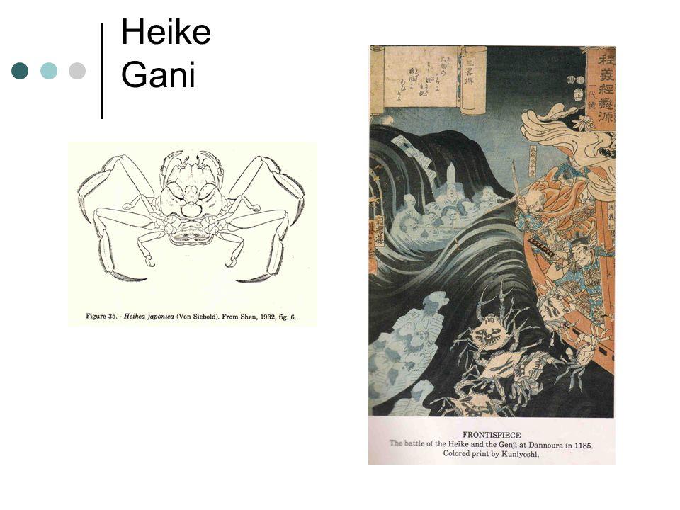 Heike Gani