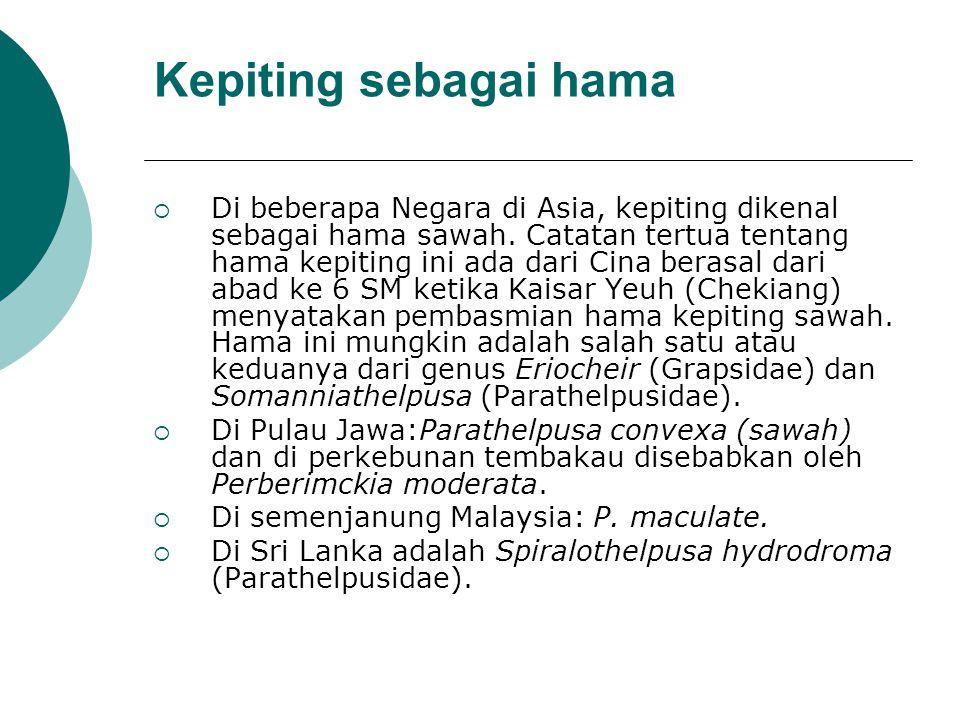 Kepiting sebagai hama DDi beberapa Negara di Asia, kepiting dikenal sebagai hama sawah.