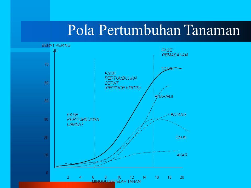Pola Pertumbuhan Tanaman
