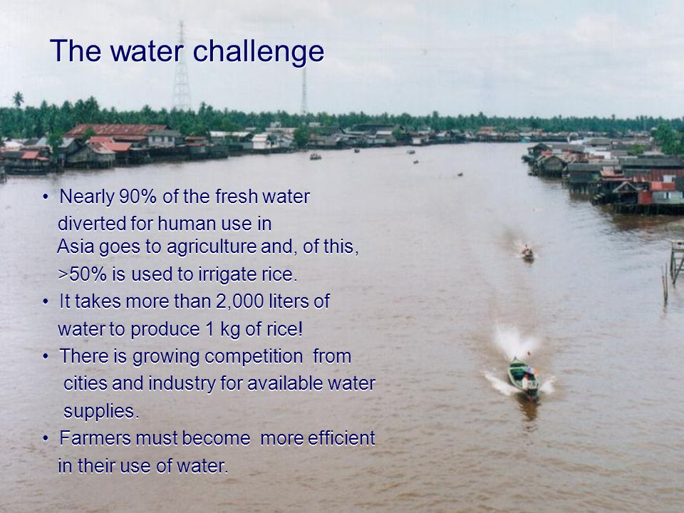 The water challenge Nearly 90% of the fresh water diverted for human use in Asia goes to agriculture and, of this, >50% is used to irrigate rice.