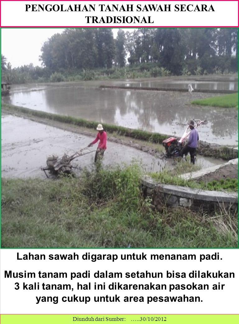 PENGOLAHAN TANAH SAWAH SECARA TRADISIONAL Lahan sawah digarap untuk menanam padi.