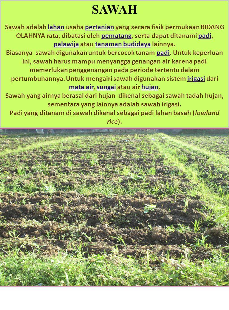SAWAH Sawah adalah lahan usaha pertanian yang secara fisik permukaan BIDANG OLAHNYA rata, dibatasi oleh pematang, serta dapat ditanami padi, palawija atau tanaman budidaya lainnya.lahanpertanianpematangpadi palawijatanaman budidaya Biasanya sawah digunakan untuk bercocok tanam padi.