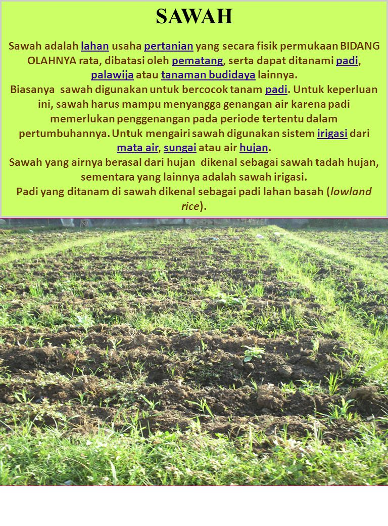 EKOSISTEM SWAH Dalam usaha budidaya padi harus diketahui faktor-faktor yang mempengaruhi pertumbuhan tanaman secara ekologi, baik faktor biotik dan abiotik di lingkungan tumbuh tanaman tersebut.