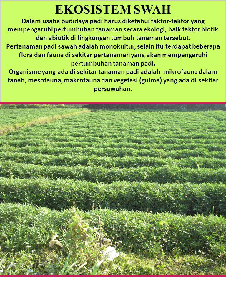 EKOSISTEM SWAH Dalam usaha budidaya padi harus diketahui faktor-faktor yang mempengaruhi pertumbuhan tanaman secara ekologi, baik faktor biotik dan ab