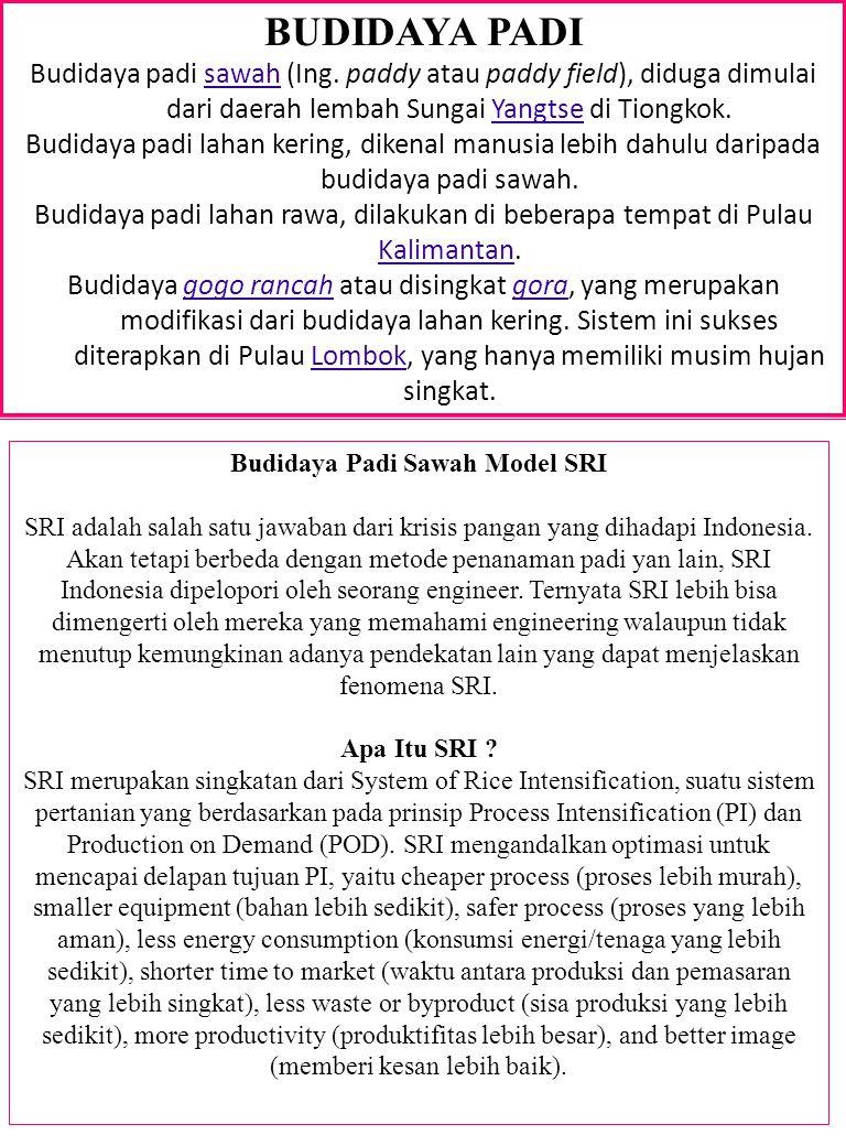 BUDIDAYA PADI Budidaya padi sawah (Ing.