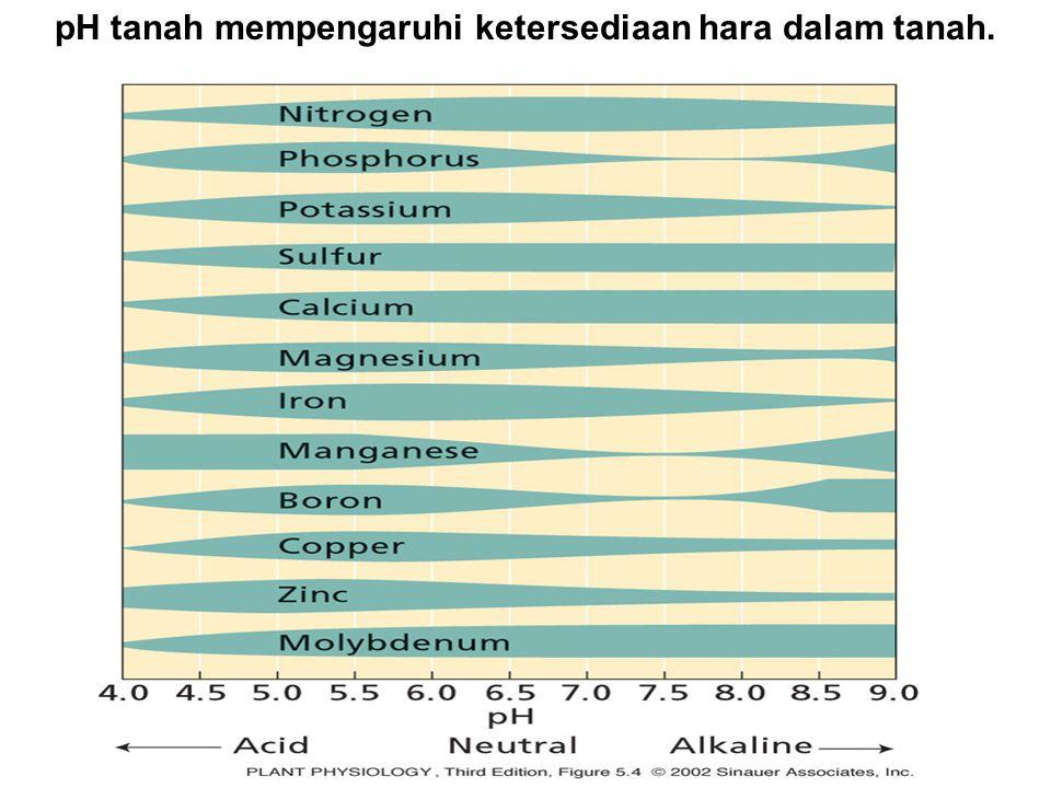 pH tanah mempengaruhi ketersediaan hara dalam tanah.