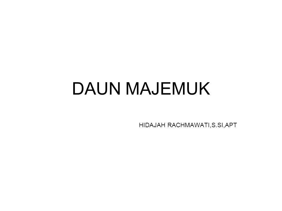 DAUN MAJEMUK HIDAJAH RACHMAWATI,S.SI,APT