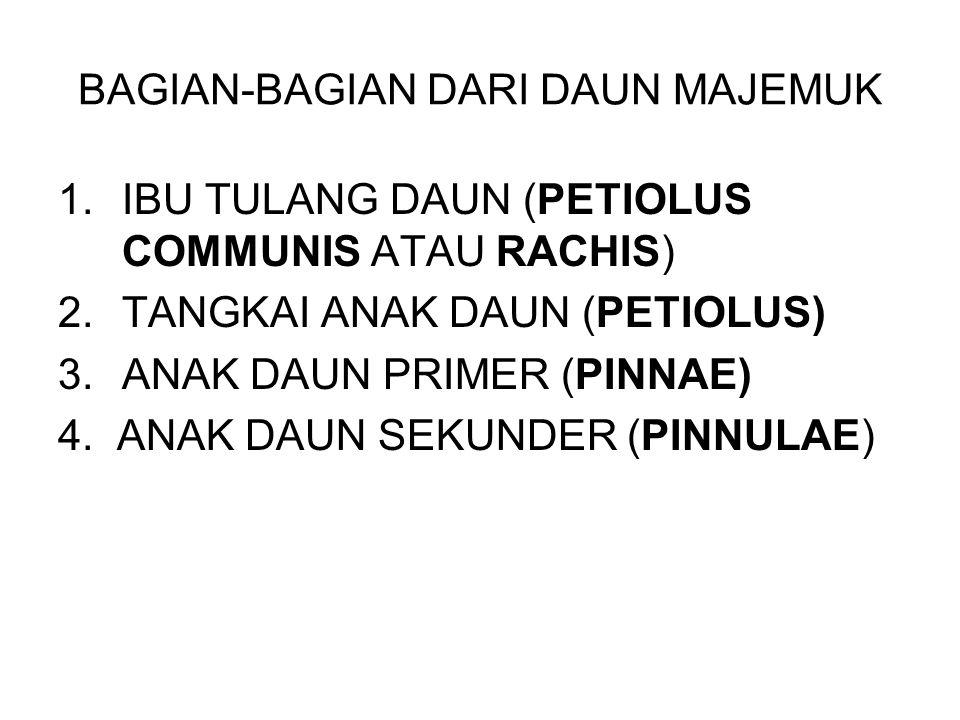 BAGIAN-BAGIAN DARI DAUN MAJEMUK 1.IBU TULANG DAUN (PETIOLUS COMMUNIS ATAU RACHIS) 2.TANGKAI ANAK DAUN (PETIOLUS) 3.ANAK DAUN PRIMER (PINNAE) 4. ANAK D