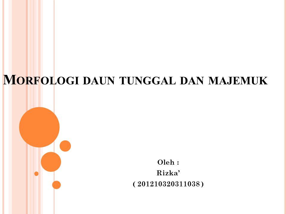 M ORFOLOGI DAUN TUNGGAL DAN MAJEMUK Oleh : Rizka' ( 201210320311038 )