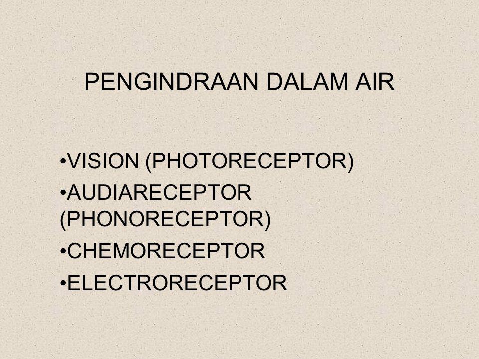 PENGINDRAAN DALAM AIR VISION (PHOTORECEPTOR) AUDIARECEPTOR (PHONORECEPTOR) CHEMORECEPTOR ELECTRORECEPTOR