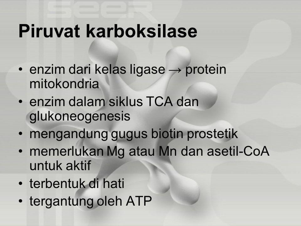 Piruvat karboksilase enzim dari kelas ligase → protein mitokondria enzim dalam siklus TCA dan glukoneogenesis mengandung gugus biotin prostetik memerlukan Mg atau Mn dan asetil-CoA untuk aktif terbentuk di hati tergantung oleh ATP