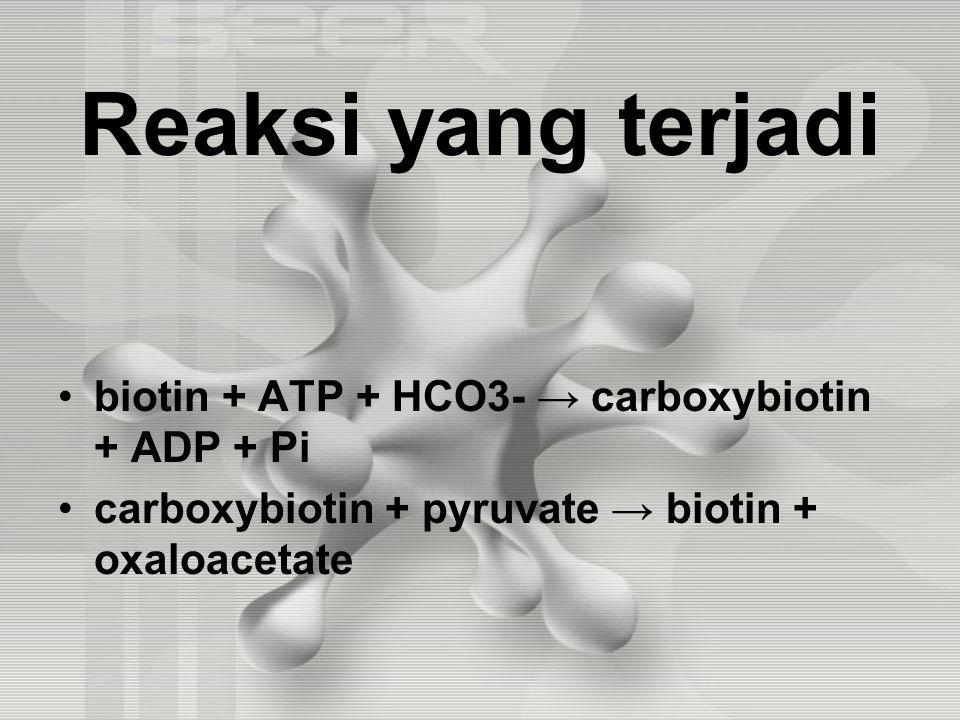Reaksi yang terjadi biotin + ATP + HCO3- → carboxybiotin + ADP + Pi carboxybiotin + pyruvate → biotin + oxaloacetate