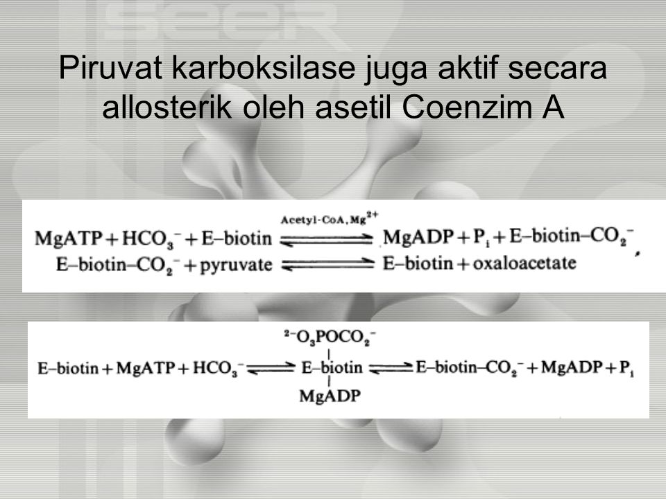 Piruvat karboksilase juga aktif secara allosterik oleh asetil Coenzim A