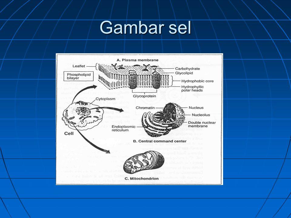 Gambar sel