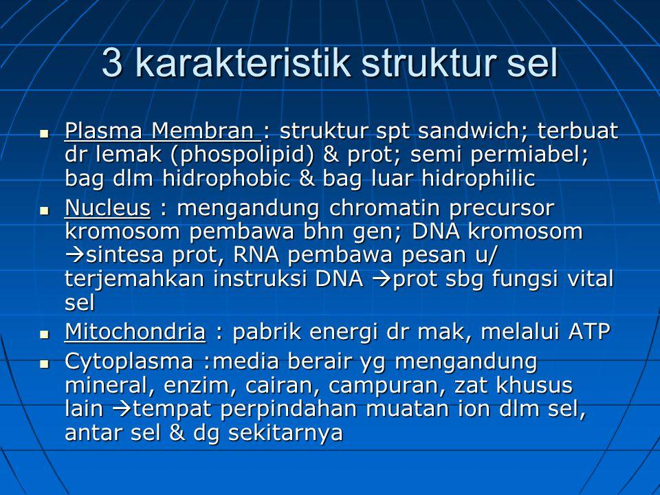 3 karakteristik struktur sel Plasma Membran : struktur spt sandwich; terbuat dr lemak (phospolipid) & prot; semi permiabel; bag dlm hidrophobic & bag luar hidrophilic Plasma Membran : struktur spt sandwich; terbuat dr lemak (phospolipid) & prot; semi permiabel; bag dlm hidrophobic & bag luar hidrophilic Nucleus : mengandung chromatin precursor kromosom pembawa bhn gen; DNA kromosom  sintesa prot, RNA pembawa pesan u/ terjemahkan instruksi DNA  prot sbg fungsi vital sel Nucleus : mengandung chromatin precursor kromosom pembawa bhn gen; DNA kromosom  sintesa prot, RNA pembawa pesan u/ terjemahkan instruksi DNA  prot sbg fungsi vital sel Mitochondria : pabrik energi dr mak, melalui ATP Mitochondria : pabrik energi dr mak, melalui ATP Cytoplasma :media berair yg mengandung mineral, enzim, cairan, campuran, zat khusus lain  tempat perpindahan muatan ion dlm sel, antar sel & dg sekitarnya Cytoplasma :media berair yg mengandung mineral, enzim, cairan, campuran, zat khusus lain  tempat perpindahan muatan ion dlm sel, antar sel & dg sekitarnya
