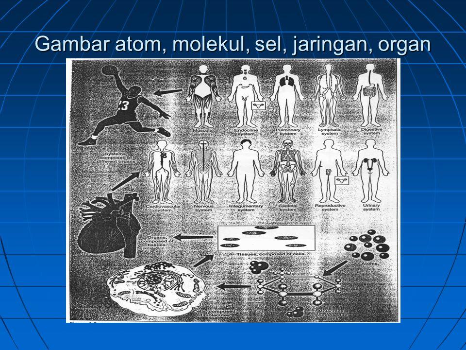 Gambar atom, molekul, sel, jaringan, organ