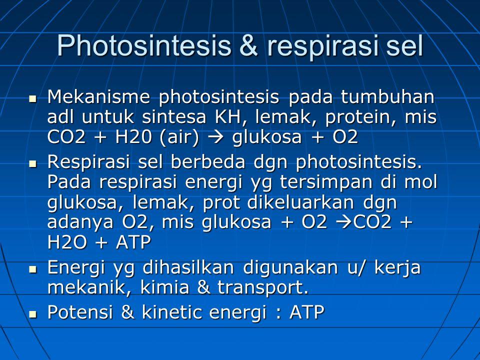 Photosintesis & respirasi sel Mekanisme photosintesis pada tumbuhan adl untuk sintesa KH, lemak, protein, mis CO2 + H20 (air)  glukosa + O2 Mekanisme photosintesis pada tumbuhan adl untuk sintesa KH, lemak, protein, mis CO2 + H20 (air)  glukosa + O2 Respirasi sel berbeda dgn photosintesis.