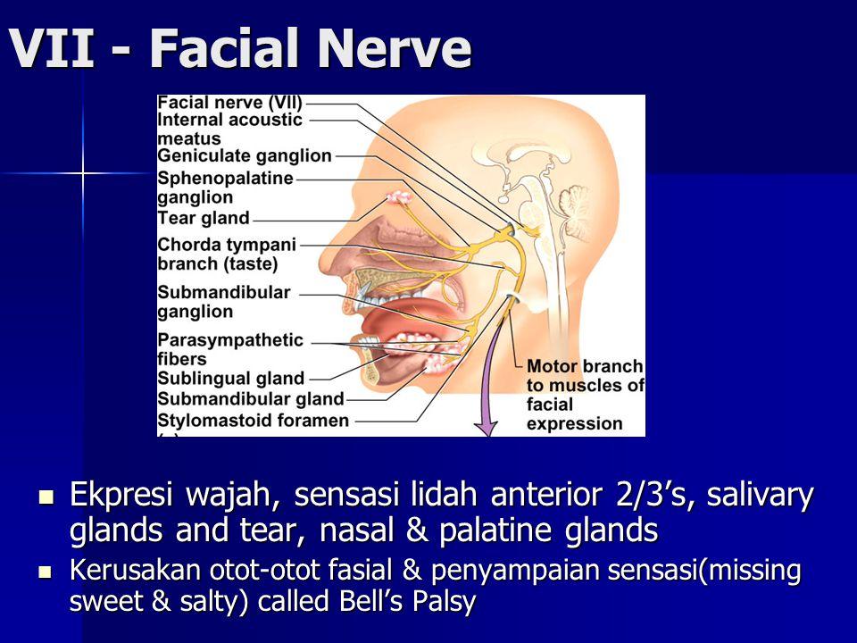 VII - Facial Nerve Ekpresi wajah, sensasi lidah anterior 2/3's, salivary glands and tear, nasal & palatine glands Ekpresi wajah, sensasi lidah anterior 2/3's, salivary glands and tear, nasal & palatine glands Kerusakan otot-otot fasial & penyampaian sensasi(missing sweet & salty) called Bell's Palsy Kerusakan otot-otot fasial & penyampaian sensasi(missing sweet & salty) called Bell's Palsy