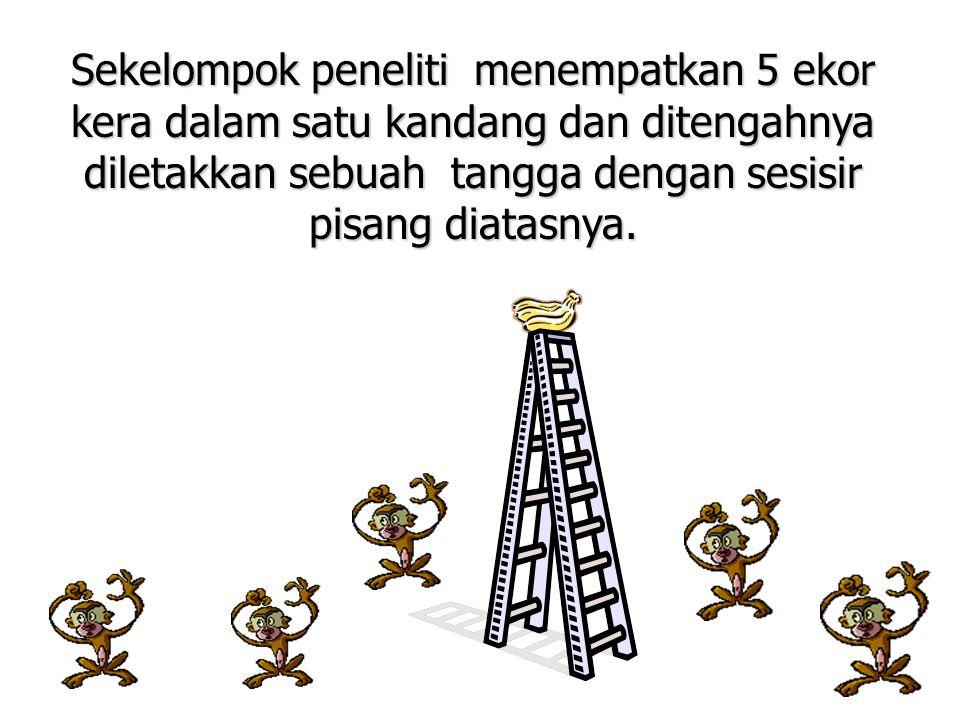 Pada saat seekor kera memanjat tangga tersebut, peneliti menyiram kera lainnya dengan air dingin.