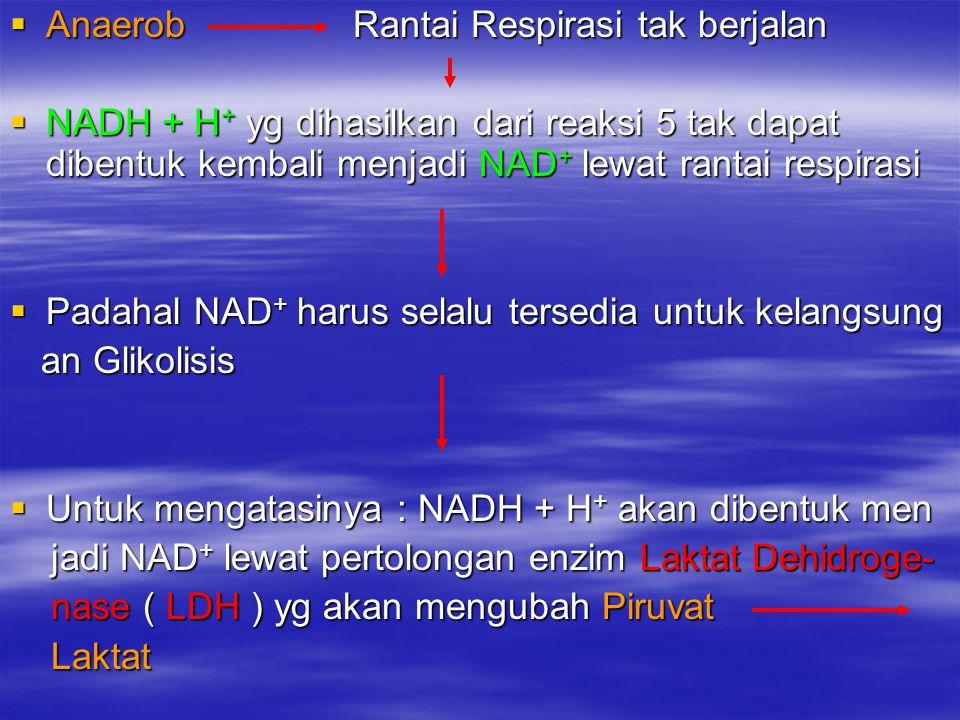  Anaerob Rantai Respirasi tak berjalan  NADH + H + yg dihasilkan dari reaksi 5 tak dapat dibentuk kembali menjadi NAD + lewat rantai respirasi  Pad