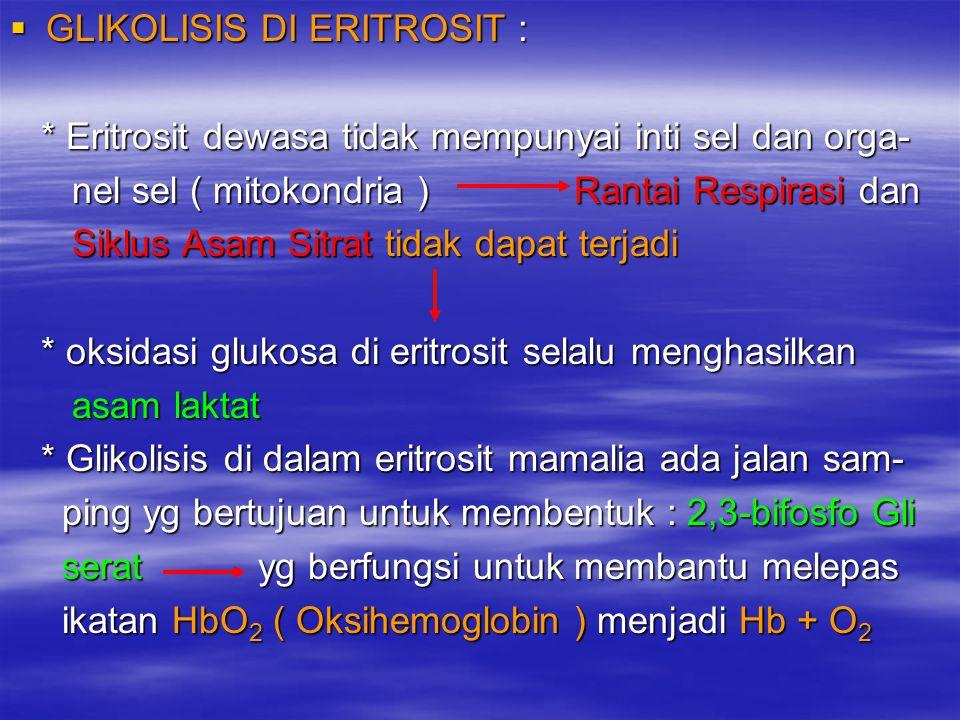  GLIKOLISIS DI ERITROSIT : * Eritrosit dewasa tidak mempunyai inti sel dan orga- * Eritrosit dewasa tidak mempunyai inti sel dan orga- nel sel ( mito