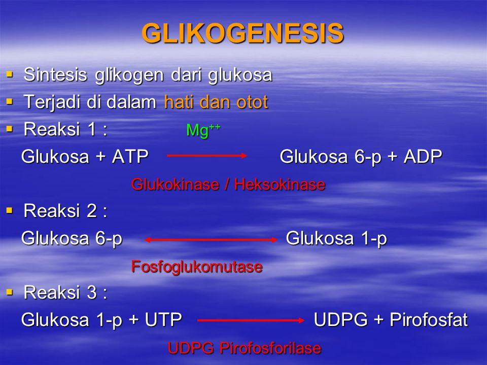 GLIKOGENESIS  Sintesis glikogen dari glukosa  Terjadi di dalam hati dan otot  Reaksi 1 : Mg ++ Glukosa + ATP Glukosa 6-p + ADP Glukosa + ATP Glukos