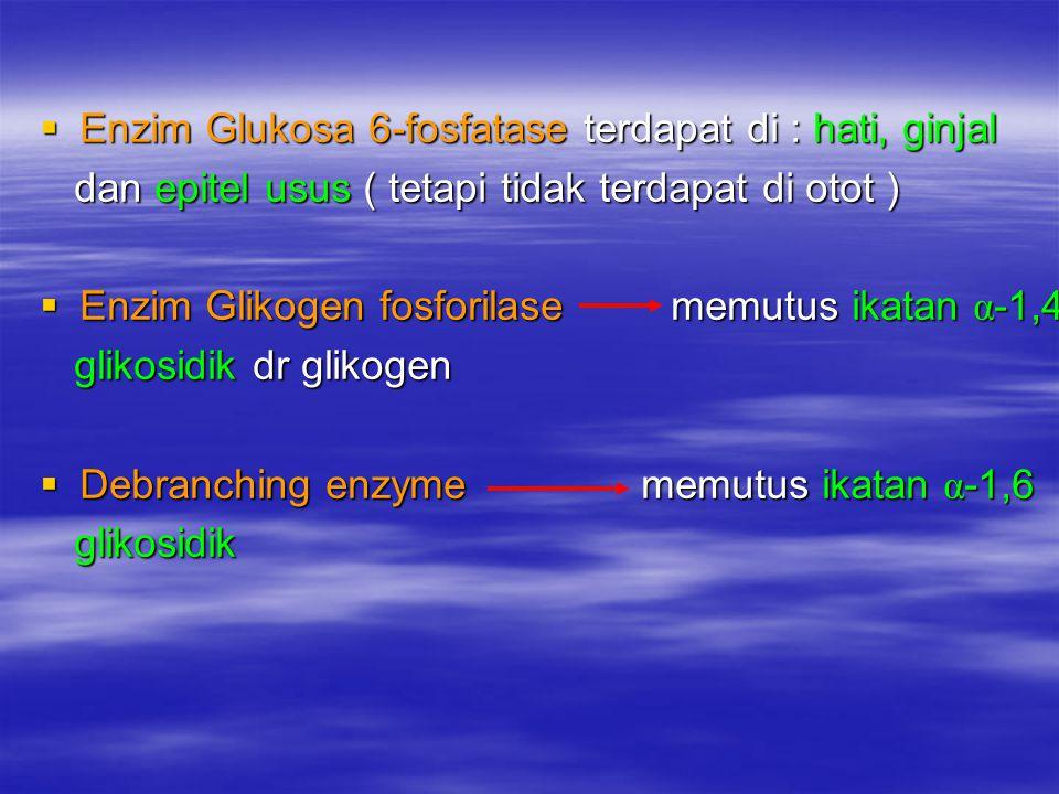  Enzim Glukosa 6-fosfatase terdapat di : hati, ginjal dan epitel usus ( tetapi tidak terdapat di otot ) dan epitel usus ( tetapi tidak terdapat di ot