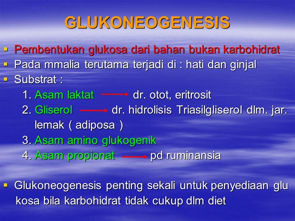 GLUKONEOGENESIS  Pembentukan glukosa dari bahan bukan karbohidrat  Pada mmalia terutama terjadi di : hati dan ginjal  Substrat : 1. Asam laktat dr.