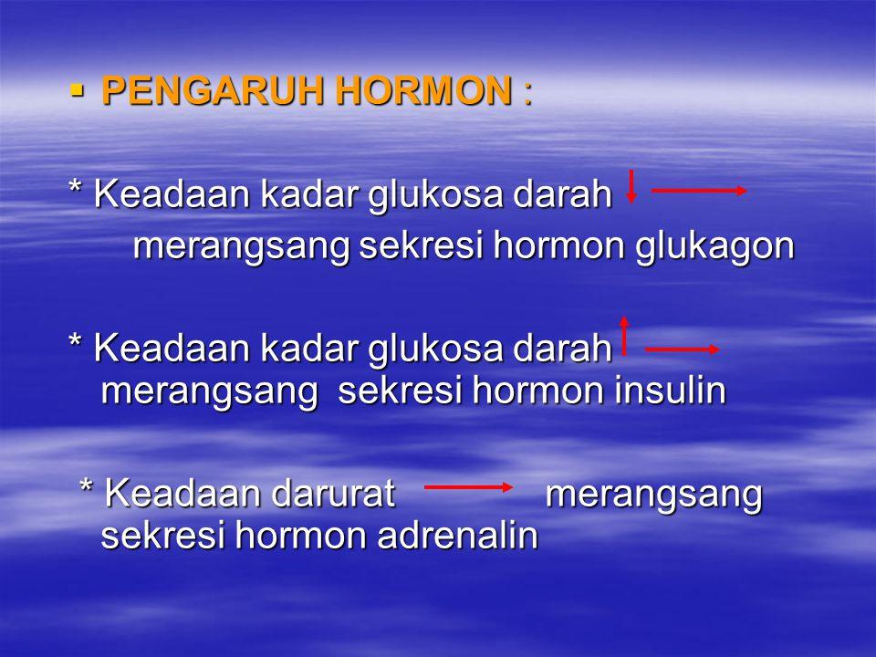  PENGARUH HORMON : * Keadaan kadar glukosa darah merangsang sekresi hormon glukagon merangsang sekresi hormon glukagon * Keadaan kadar glukosa darah