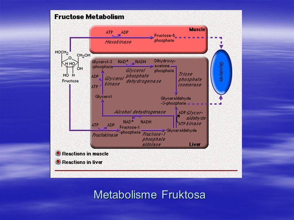 Metabolisme Fruktosa