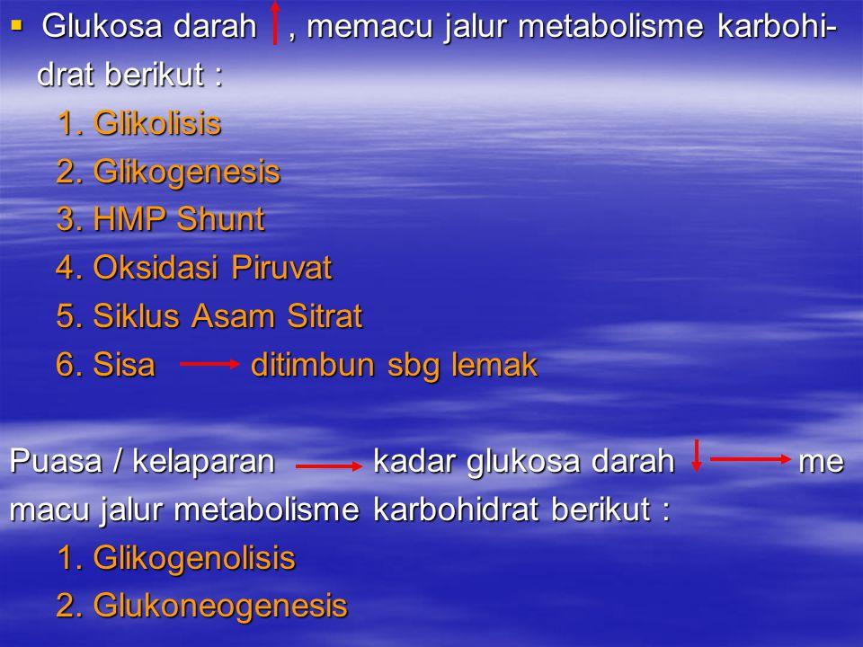  Glukosa darah, memacu jalur metabolisme karbohi- drat berikut : drat berikut : 1. Glikolisis 1. Glikolisis 2. Glikogenesis 2. Glikogenesis 3. HMP Sh