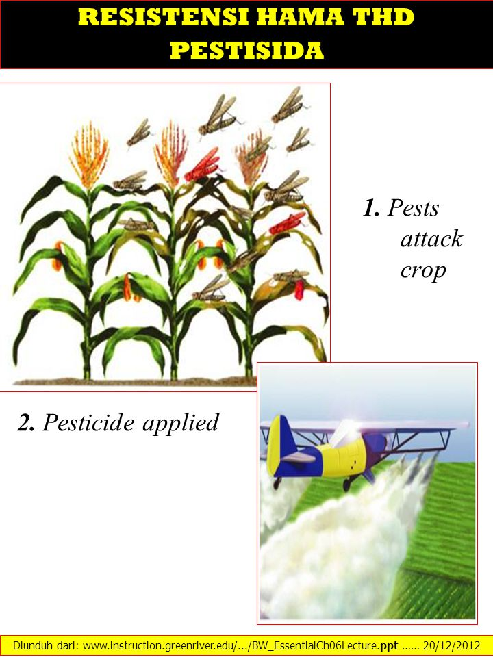 1. Pests attack crop 2. Pesticide applied Diunduh dari: www.instruction.greenriver.edu/.../BW_EssentialCh06Lecture.ppt …… 20/12/2012 RESISTENSI HAMA T