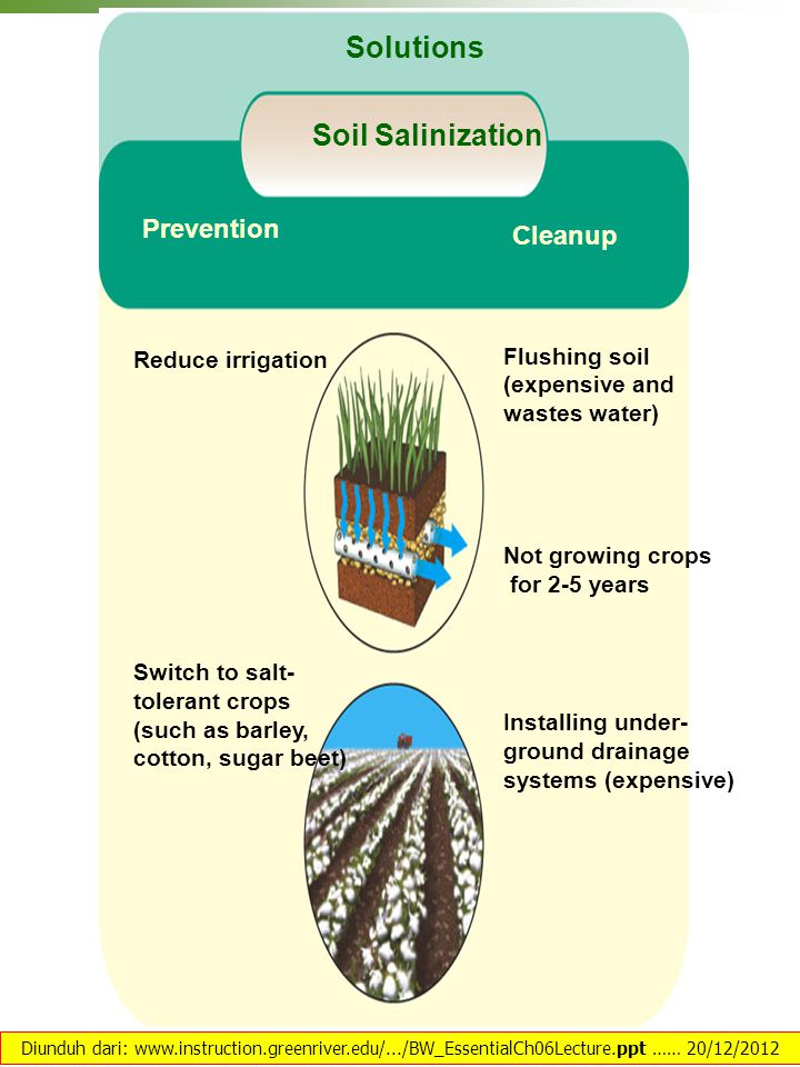 Reduce irrigation Switch to salt- tolerant crops (such as barley, cotton, sugar beet) Prevention Flushing soil (expensive and wastes water) Not growin
