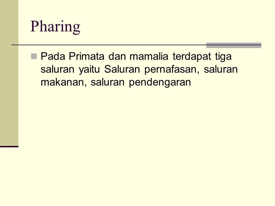 Pharing Pada Primata dan mamalia terdapat tiga saluran yaitu Saluran pernafasan, saluran makanan, saluran pendengaran