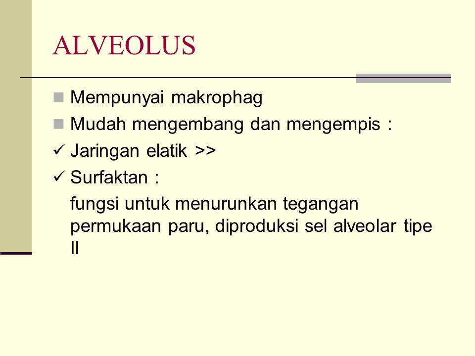 ALVEOLUS Mempunyai makrophag Mudah mengembang dan mengempis : Jaringan elatik >> Surfaktan : fungsi untuk menurunkan tegangan permukaan paru, diproduk