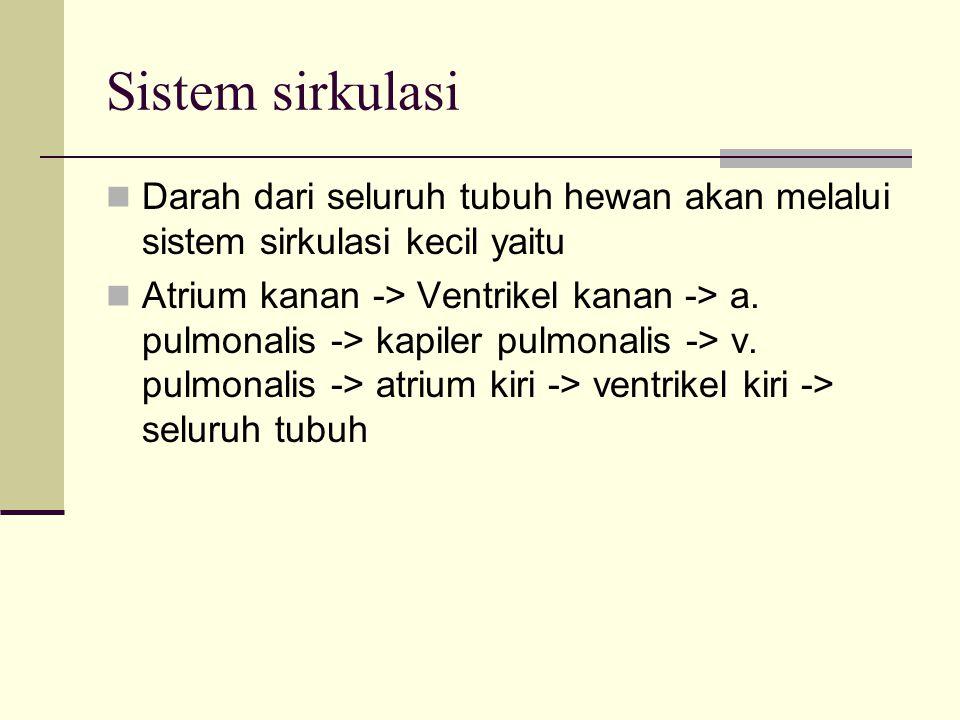 Sistem sirkulasi Darah dari seluruh tubuh hewan akan melalui sistem sirkulasi kecil yaitu Atrium kanan -> Ventrikel kanan -> a. pulmonalis -> kapiler