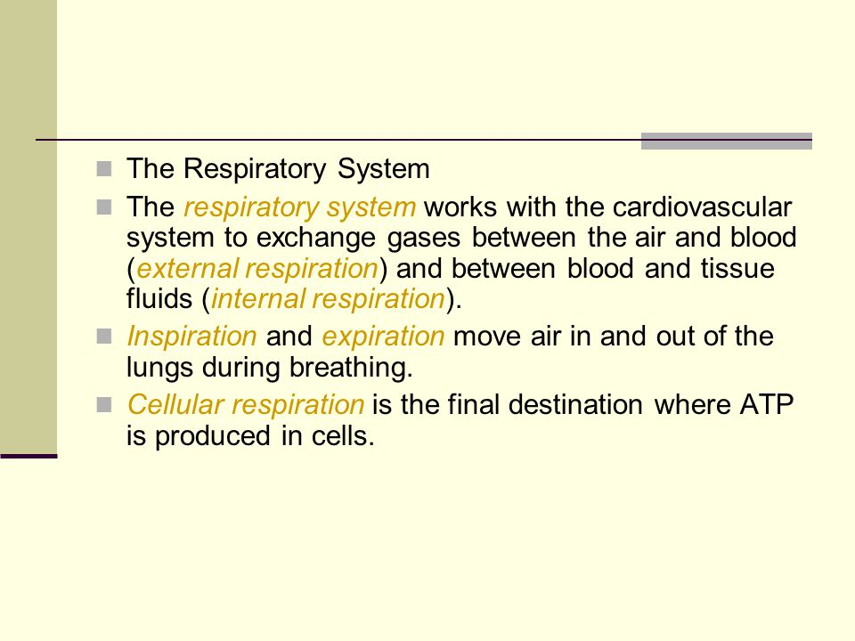 The Respiratory System The respiratory system works with the cardiovascular system to exchange gases between the air and blood (external respiration)