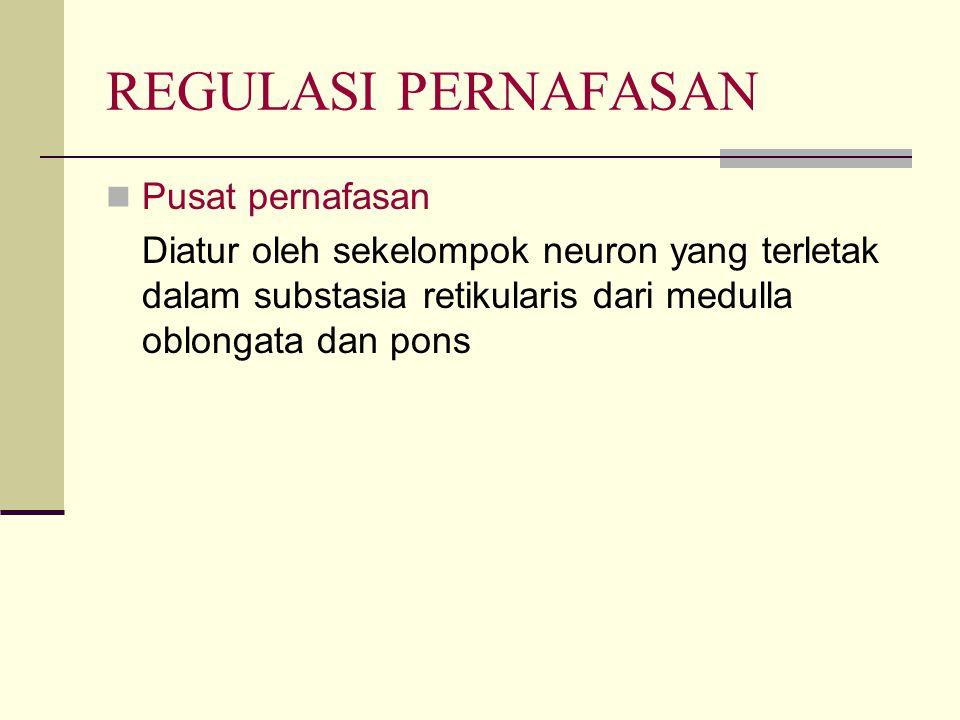 REGULASI PERNAFASAN Pusat pernafasan Diatur oleh sekelompok neuron yang terletak dalam substasia retikularis dari medulla oblongata dan pons