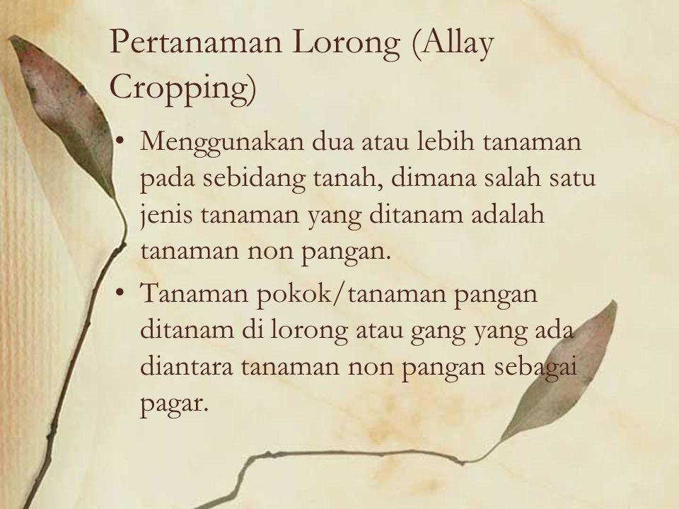 Pertanaman Lorong (Allay Cropping) Menggunakan dua atau lebih tanaman pada sebidang tanah, dimana salah satu jenis tanaman yang ditanam adalah tanaman