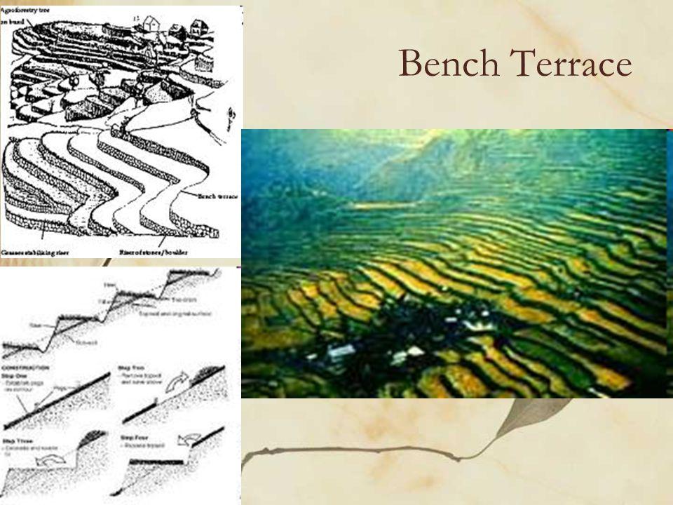 Bench Terrace