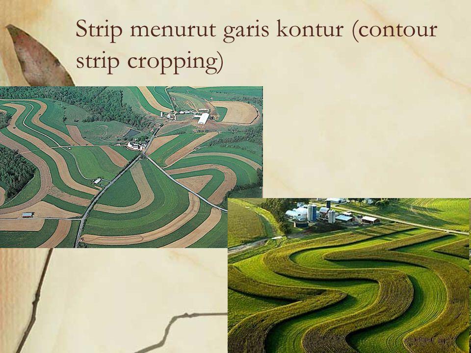 Pertanaman Lorong (Allay Cropping) Menggunakan dua atau lebih tanaman pada sebidang tanah, dimana salah satu jenis tanaman yang ditanam adalah tanaman non pangan.