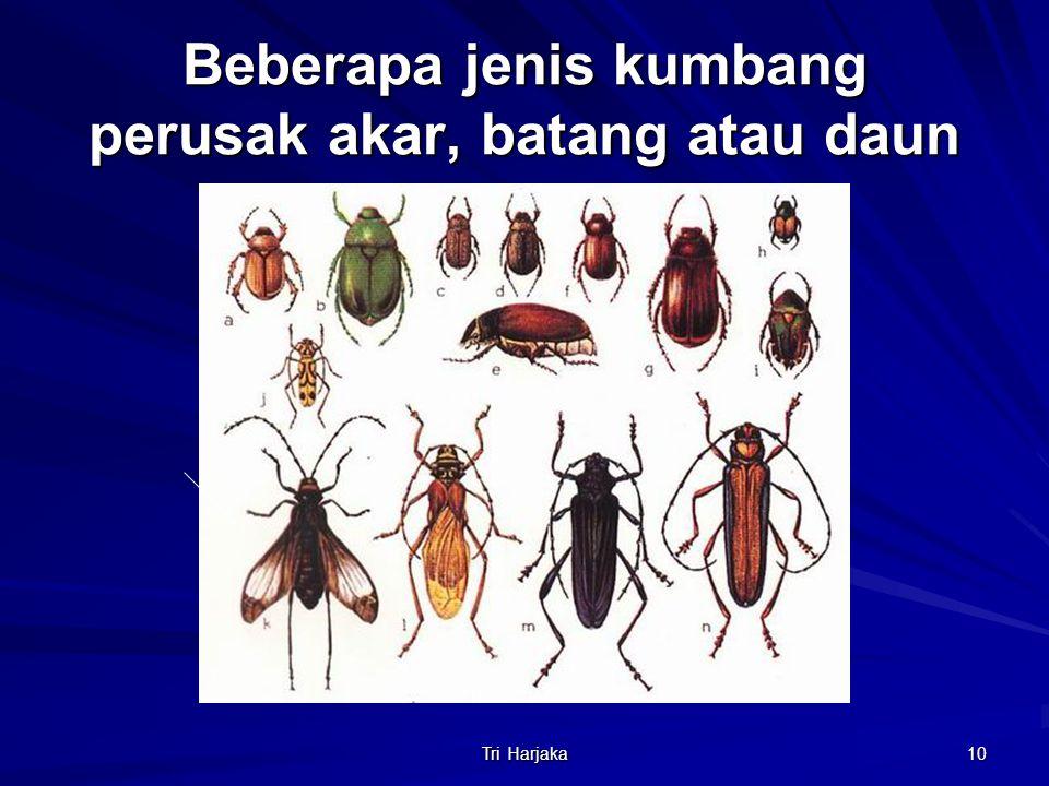 Tri Harjaka 10 Beberapa jenis kumbang perusak akar, batang atau daun