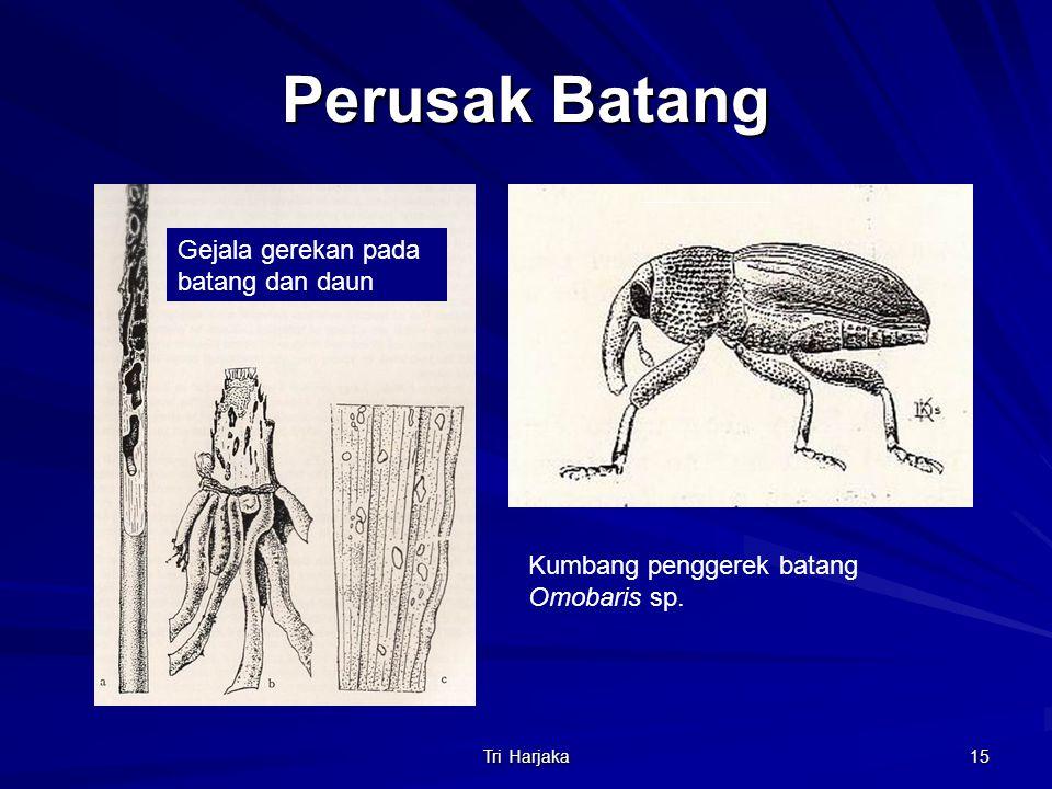 Tri Harjaka 15 Perusak Batang Gejala gerekan pada batang dan daun Kumbang penggerek batang Omobaris sp.