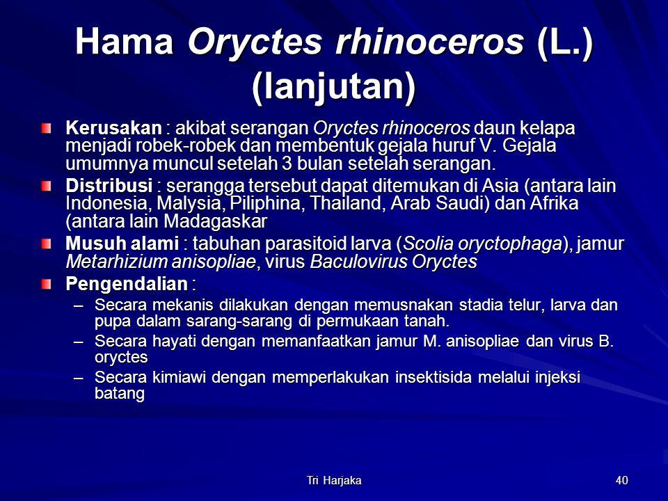 Tri Harjaka 40 Hama Oryctes rhinoceros (L.) (lanjutan) Kerusakan : akibat serangan Oryctes rhinoceros daun kelapa menjadi robek-robek dan membentuk ge
