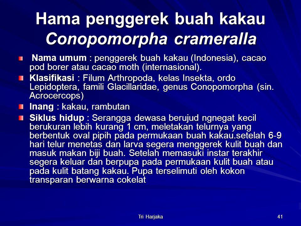 Tri Harjaka 41 Hama penggerek buah kakau Conopomorpha crameralla Nama umum : penggerek buah kakau (Indonesia), cacao pod borer atau cacao moth (intern