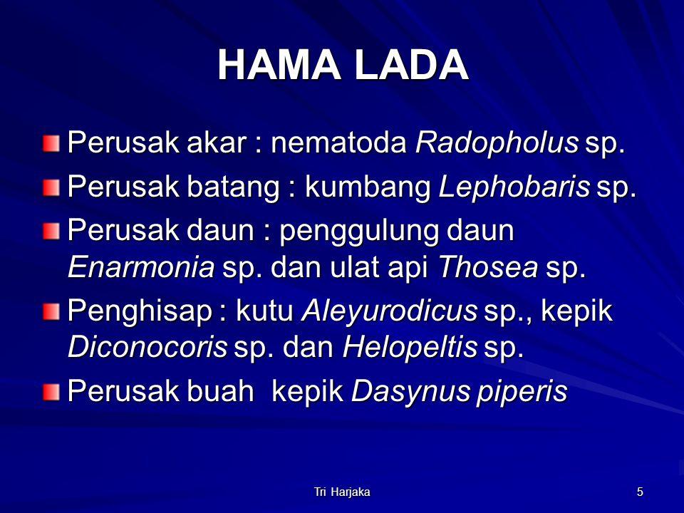 Tri Harjaka 5 HAMA LADA Perusak akar : nematoda Radopholus sp. Perusak batang : kumbang Lephobaris sp. Perusak daun : penggulung daun Enarmonia sp. da