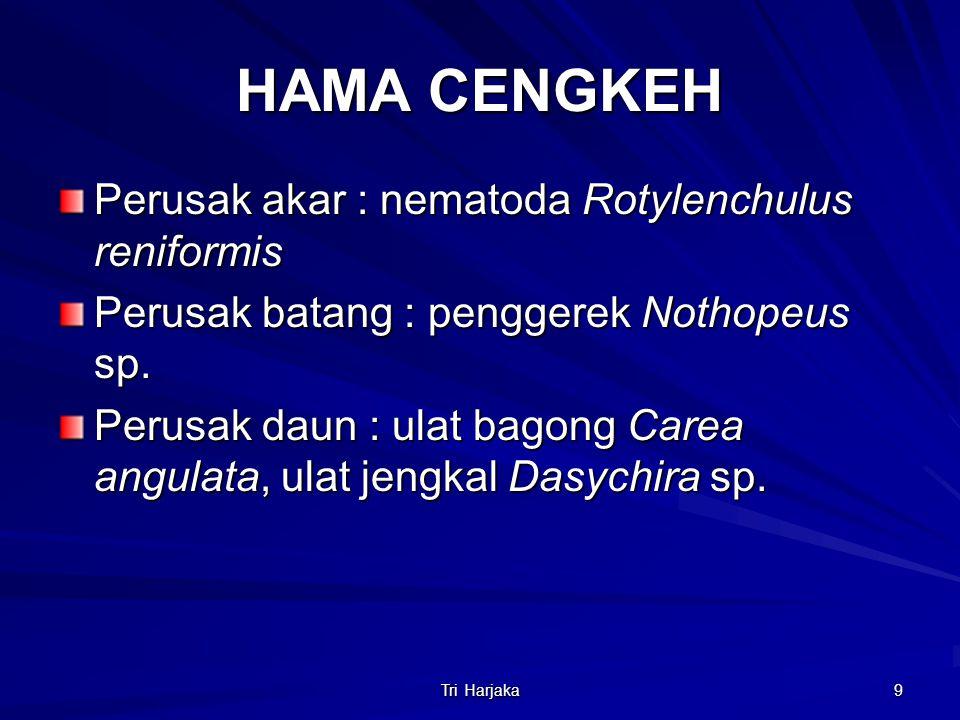 Tri Harjaka 9 HAMA CENGKEH Perusak akar : nematoda Rotylenchulus reniformis Perusak batang : penggerek Nothopeus sp. Perusak daun : ulat bagong Carea
