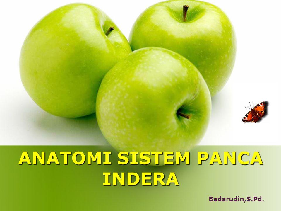 ANATOMI SISTEM PANCA INDERA Badarudin,S.Pd.
