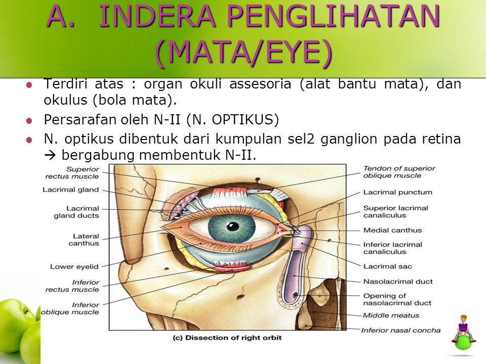 C.TUNIKA NERVOSA RETINA ; Pars optika, pars siliaris, dan pars iridika.